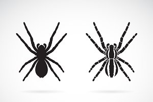 Vector of spider on white background