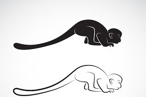 Vector of squirrel monkey design.