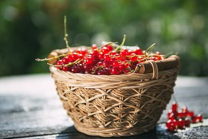 Red currant in a wicker basket
