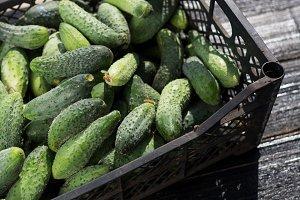 Ripe cucumbers in the box