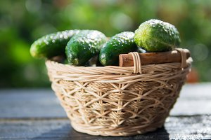 Ripe cucumbers in the basket