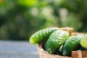 Ripe cucumbers in the basket