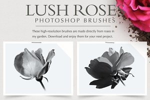 Lush Roses Photoshop Brushes
