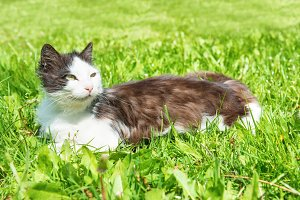 Black and white cat on a grass