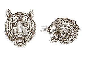 Japanese Wild Tiger and animal