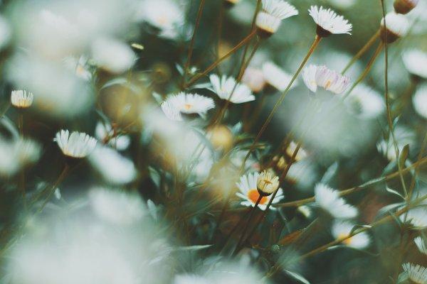 Nature Stock Photos: René Jordaan Photography - White Daisy Portrait