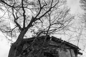 Abandoned old horror house in italy