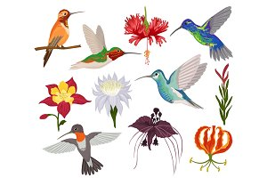Hummingbird vector tropical humming