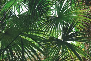 green palm background
