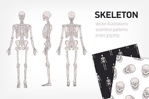 Realistic skeletons and human skulls