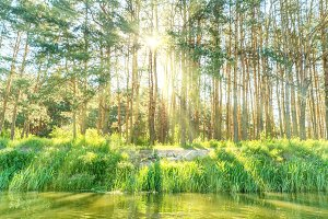 Green forest with shining sun
