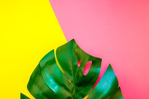 Tropical jungle monstera leaf on bri