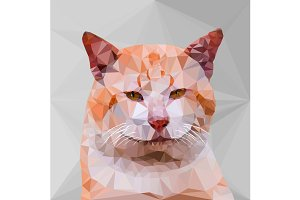 Low poly geometric of cat