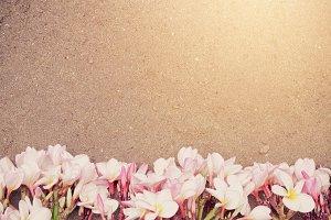 Pink Plumeria on beach background