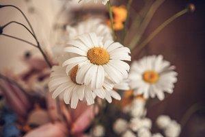 Beautiful little wild flowers