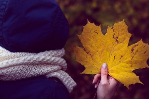 autumn maple leaf in a hand