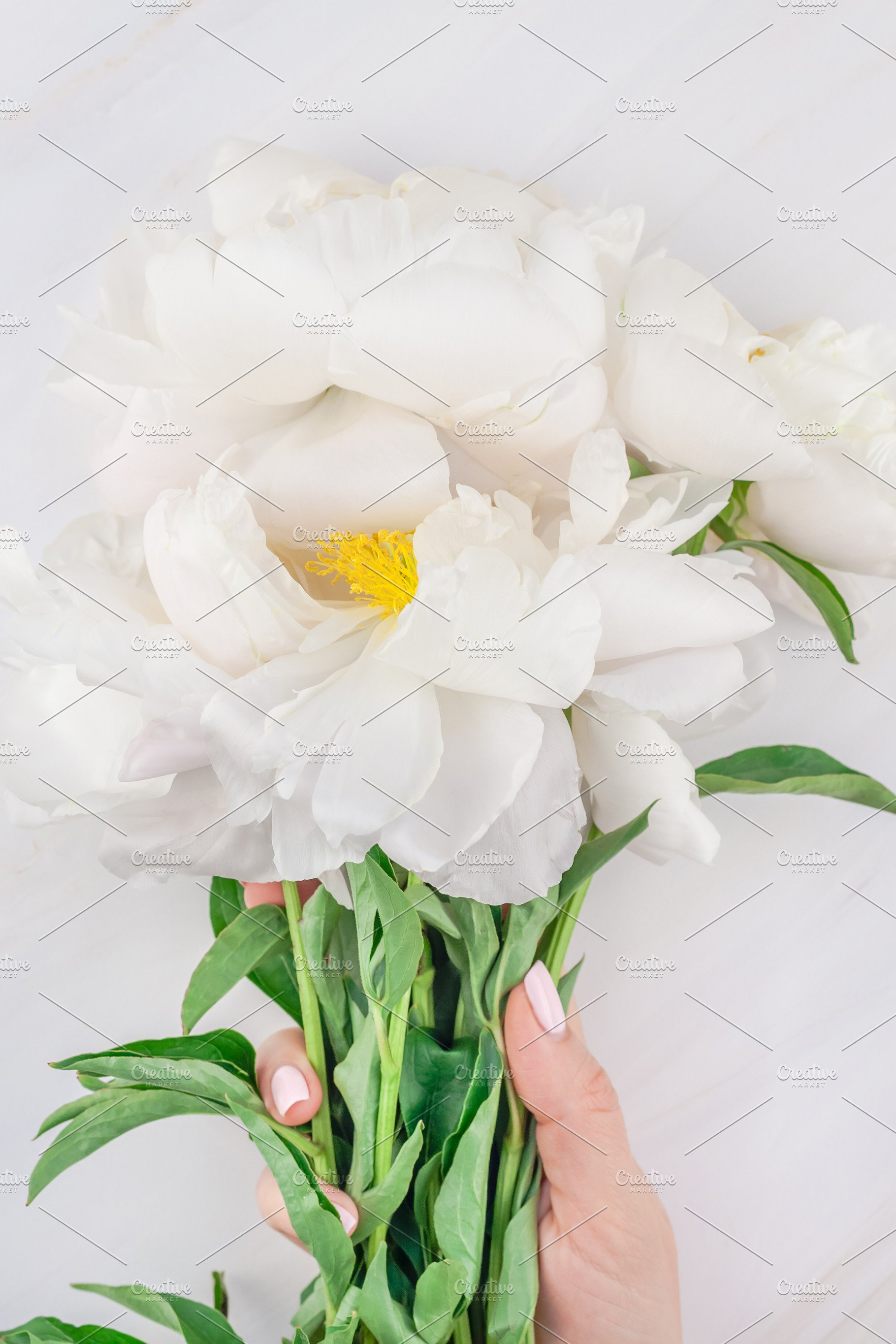 White Peony Flowers On Marble Backgr Nature Photos Creative
