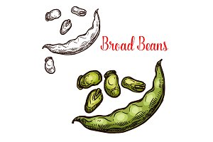 Bread beans vector sketch fruit