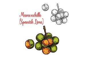 Mamonchillo lime vector sketch fruit