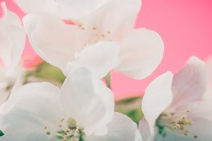 Apple blossoms over blurred color ba