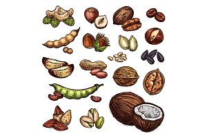 Nuts and bean seeds vector natural