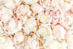 Bouquet of a lot of peonies of pink.