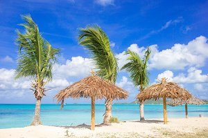 Palm trees at a tropical Caribbean b
