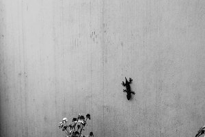 Lizard in the Wall in Black White