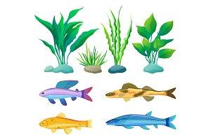 Aquarium Fish and Decorative Algae