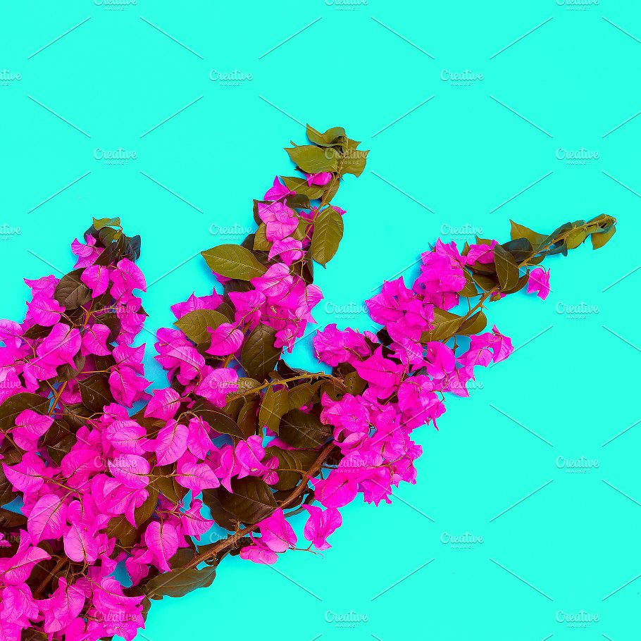 Tropical Flowers On Blue Background Nature Photos Creative Market