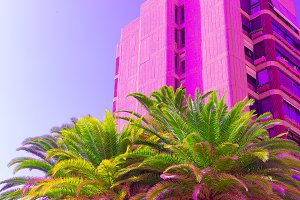 Pink colorful vibes. Tropical locati