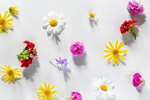 Various colorful spring flowers crea