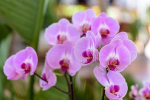 Tinted exhibition orchids IV