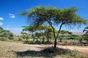 Savanna landscape, Tanzania, Africa
