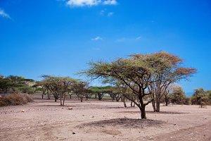 Savannah landscape, Tanzania, Africa