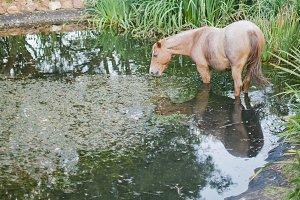 Horse & Pond