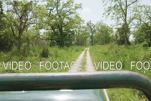Open roof jeep safari in rainforest