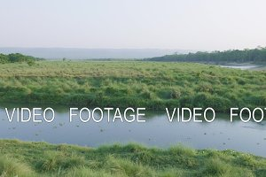 Rainforest in Chitwan national park