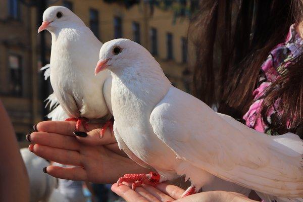 Stock Photos: Textures & Overlays - Two white doves