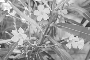 Flowers in Black and White
