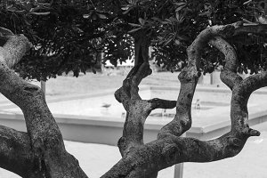 Branch Tree Black and White