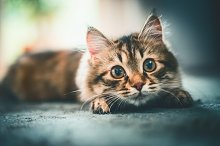Cat looks playfully at camera by  in Animals