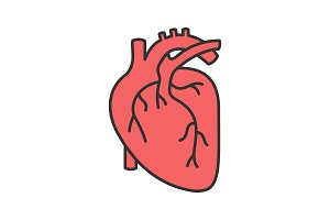 Human heart anatomy color icon