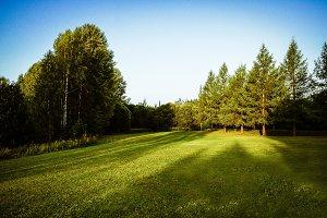 Morning sunshine on grass of Lapland