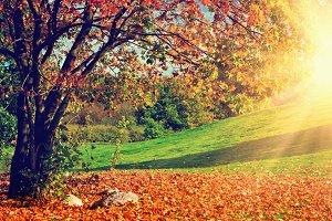 Autumnal park landscape