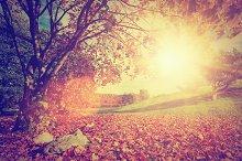Autumnal park landscape. Vintage