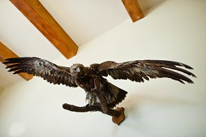 Close-up photo of an eagle on the wa