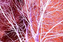 Abstract Art Trees Snow Effect