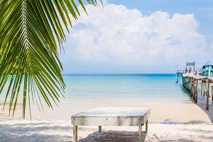 Palm leaf and tropical beach in Holi