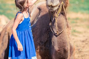 Little girl with camels in the zoo o